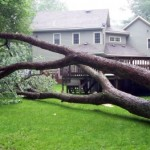 If a tree falls over your property line and no one is around to hear it… Who Pays?
